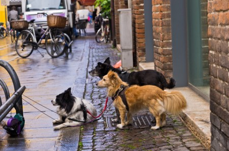 how to prevent dogs from rolling in feces