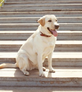 top 10 dogs for families