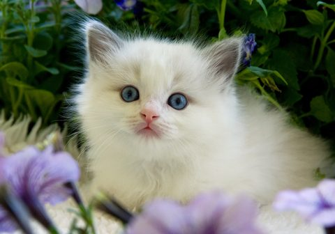 Hypoallergenic cats for people with allergies