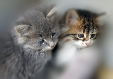 Equality for strays, rescued and adopted felines